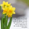 Behold Spring